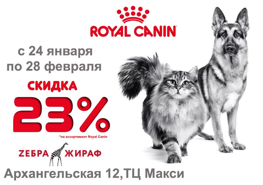 Наполнитель для кошачьего туалета недорого — купить